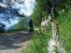 Salbertrand - Forte Pramand - Sentiero 717